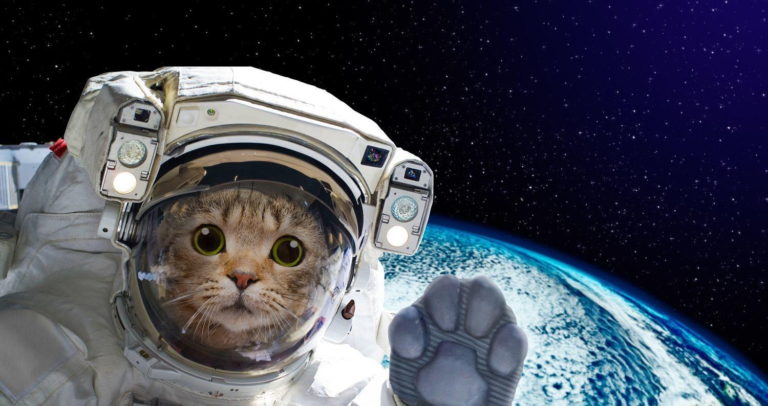 animals in space nasa - 1200×630